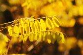 Autumn tree branch — Foto de Stock