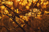 Autumn sunset plant — Stock Photo