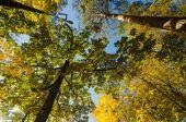Autumn sunny park — Stock Photo