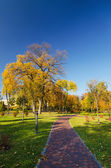Autumn sunny park — Fotografia Stock