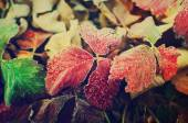 Frozen autumn leaves — Stock Photo
