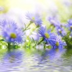 Violet flowers — Stock Photo #56236335
