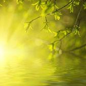 солнечный зеленые листья — Стоковое фото