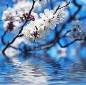 весной фон — Стоковое фото
