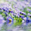 Violet flowers — Stock Photo #56897885