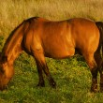 Magic horse — Stock Photo #56898237