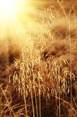 Frozen meadow plant — Stock Photo