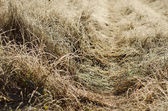 Frozen meadow grass — Stock Photo