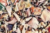 Frozen leaves — Stock Photo