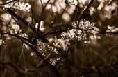Autumn sunset plant — Stock Photo