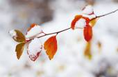 Under the snow — Stock Photo