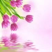 φόντο λουλούδια τουλίπα — Φωτογραφία Αρχείου