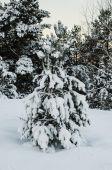 Fir tree under the snow — Stock Photo
