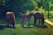 Bay hästar skrubbsår i bergen — Stockfoto