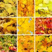 Осенняя коллекция — Стоковое фото