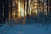 冬季景观终究场景 — 图库照片
