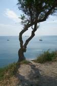 Rocky coast Black sea — Stock Photo