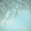 Birch trees with hoarfrost on the branches — Stock Photo #53562299