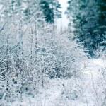 Winter scene — Stock Photo #57570475