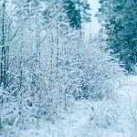 Winter scene — Stock Photo #57788041