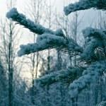 Winter scene — Stock Photo #57788043