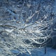 Birch trees with hoarfrost on the branches . — Stock Photo #62704705