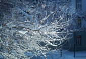 Birch trees with hoarfrost on the branches . — Stock Photo