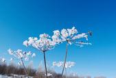 Title: Winter landscape. — Stock Photo