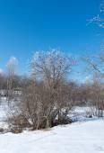 Winter landscape. frozen trees.  — Stock Photo