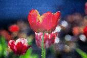 Spring red tulips flowers — Stock Photo