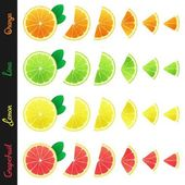 Big set of citrus slices — Stok Vektör