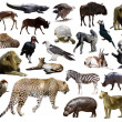 Set of leopard and other African animals. — Stock Photo