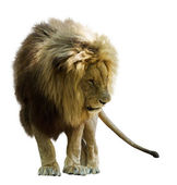 León de pie — Foto de Stock