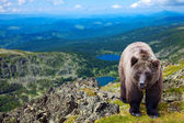 bear in wildness area — Stock Photo