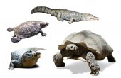 Set of several reptiles. — Stock Photo