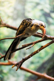 Red-billed hornbill sitting on tree   — Stock Photo