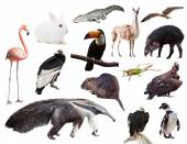 Set of  anteater and other animals of South America  — Stock Photo