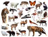 Asian fauna — Stock Photo