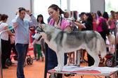 Catalonia dog exhibition — Stock Photo