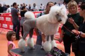 Catalonia dog exhibition — 图库照片