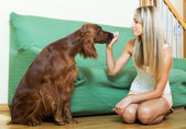Girl communicating with Irish setter   — Stock Photo
