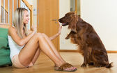woman communicating with Irish setter — Foto Stock
