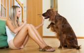 woman communicating with Irish setter — Stock Photo