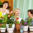Women and girl taking care of  plants — Stock Photo #52531295