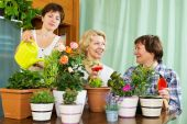 Women and girl taking care of  plants — Stock Photo