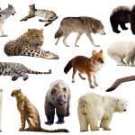 Set of few predators. — Stock Photo #54977505