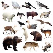 Set of european animals — Foto de Stock