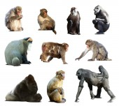 Set of many monkeys. — Foto de Stock