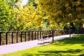 Sunny summer park   — Stock Photo