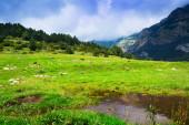 Prato montano con piccolo lago — Foto Stock